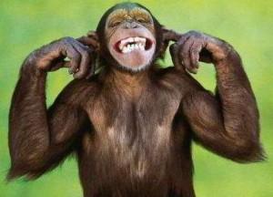 Ceramica integrale - scimmia che non sente